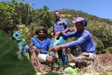 Mudança do clima pode ampliar agroindústria no Sertão do Estado